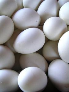 Eggs by Jardek